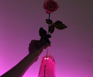 rose, pink, and aesthetic image