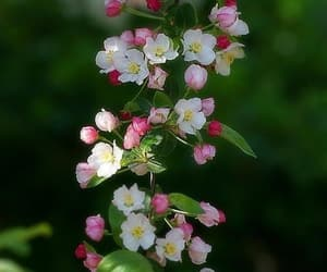 flower, pink, and cute image
