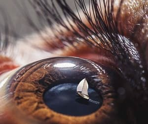 eye, brown, and photography image