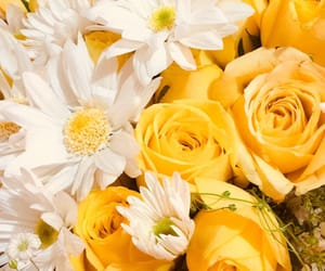 flowers, roses, and yellow image