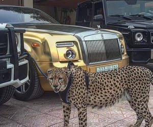 animal, car, and rich image