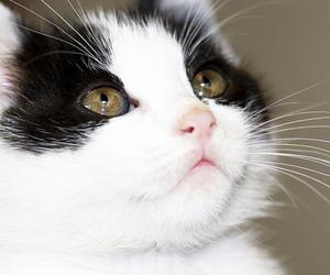 animal, bocca, and eyes image