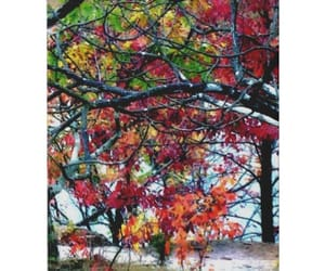 Missouri, colorful leaves, and trees image