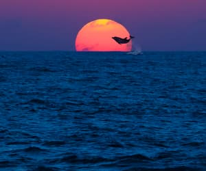sunset, dolphin, and ocean image
