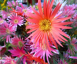colors, flowers, and cores image