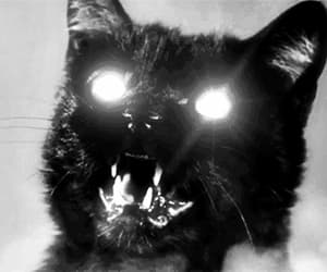 cat, gif, and scary image