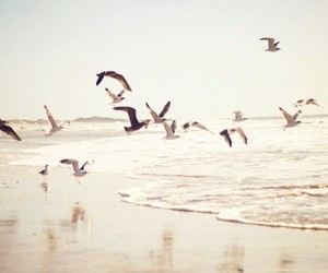 bird, beach, and photography image