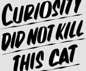 cat, quotes, and curiosity image