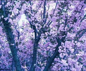 aesthetic, flowers, and purple image
