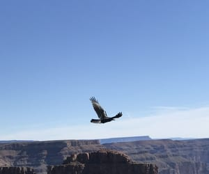 arizona, crow, and traveling image