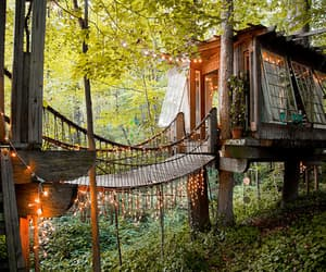 house, forest, and treehouse image
