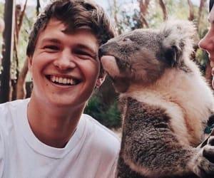 ansel elgort, boy, and Koala image