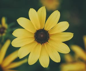beauty, botanical, and daisy image