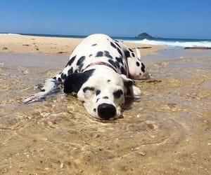 dog, animal, and dalmatian image