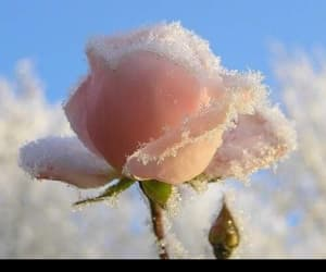 beauty, winter, and flowers image