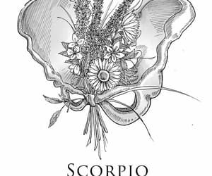 horoscope, quotes, and scorpio image