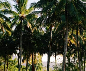 nature, palm trees, and green world image