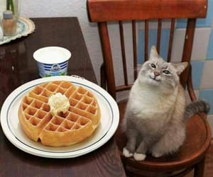cat and pancakes image