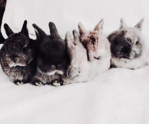 animal, animals, and bunnies image