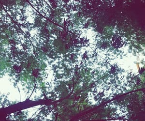 aesthetic, beautiful, and tree image