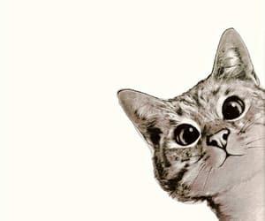 cat, gatinho, and pretty image