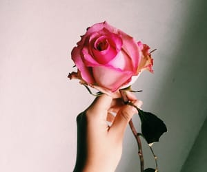 hand, touch, and pink rose image