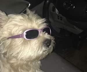 aesthetic, dog, and glitter image