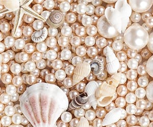 pearls, shell, and wallpaper image