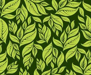 background, green, and leaf image