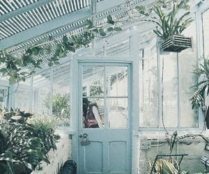 plants, blue, and garden image