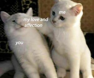 cat, kitten, and meme image