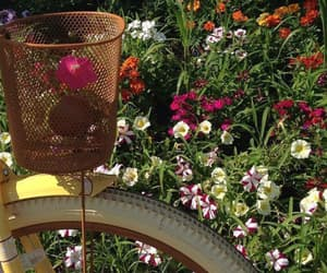 bicicle, flowers, and wallper image
