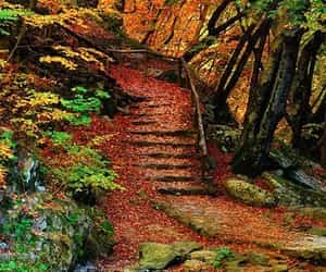 lake, nature, and autumn landscape image