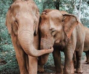 elephant, animal, and nature image