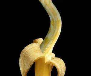 snake, banana, and animal image