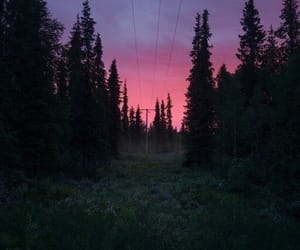 dark, photography, and pink image