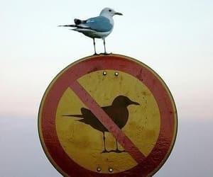 gull image