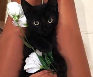 cat, black cat, and flowers image