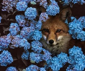 fox, animals, and flowers image