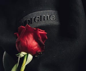 rose, supreme, and red image