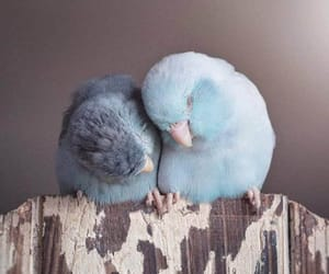 bird, cute, and love image
