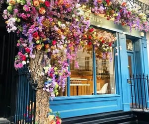flowers, ًورود, and زهور image