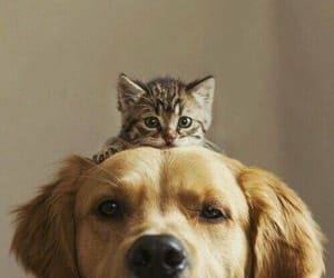 cat, kitty, and cuteness image