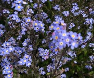 flowers and ploudalmezeau image