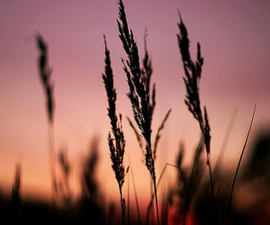 grass, nature, and red image