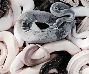theme and snake image