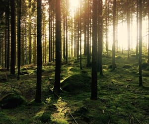 forest, sweden, and inspiration image