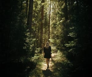 forest, inspiration, and swedish image