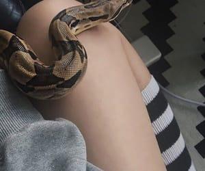 snake, animal, and girl image