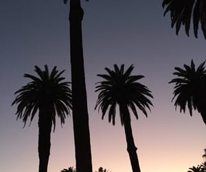california, palmtree, and sunset image